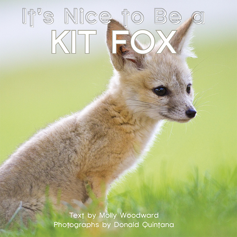 It's Nice to Be a Kit Fox