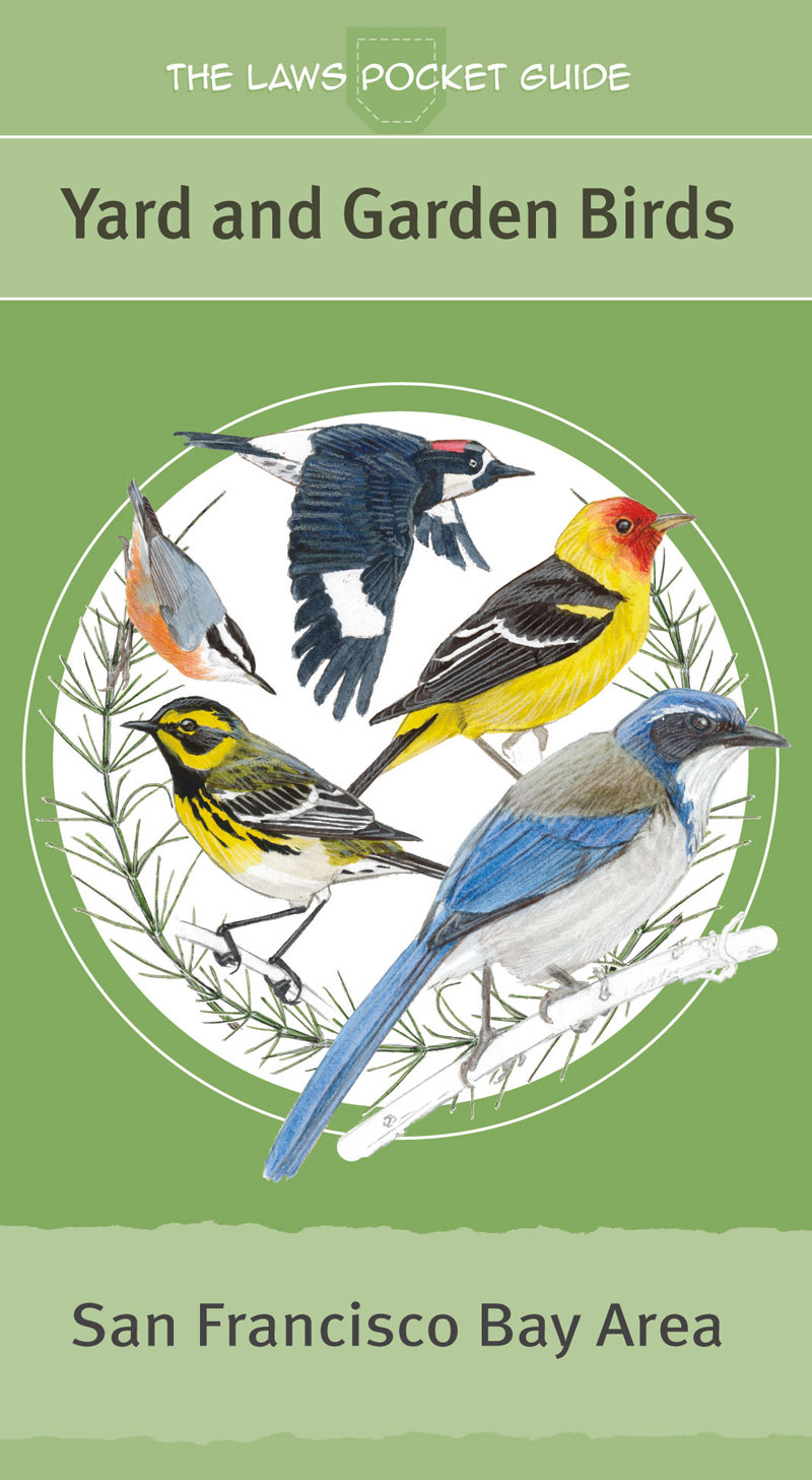 The Laws Pocket Guide: Yard and Garden Birds