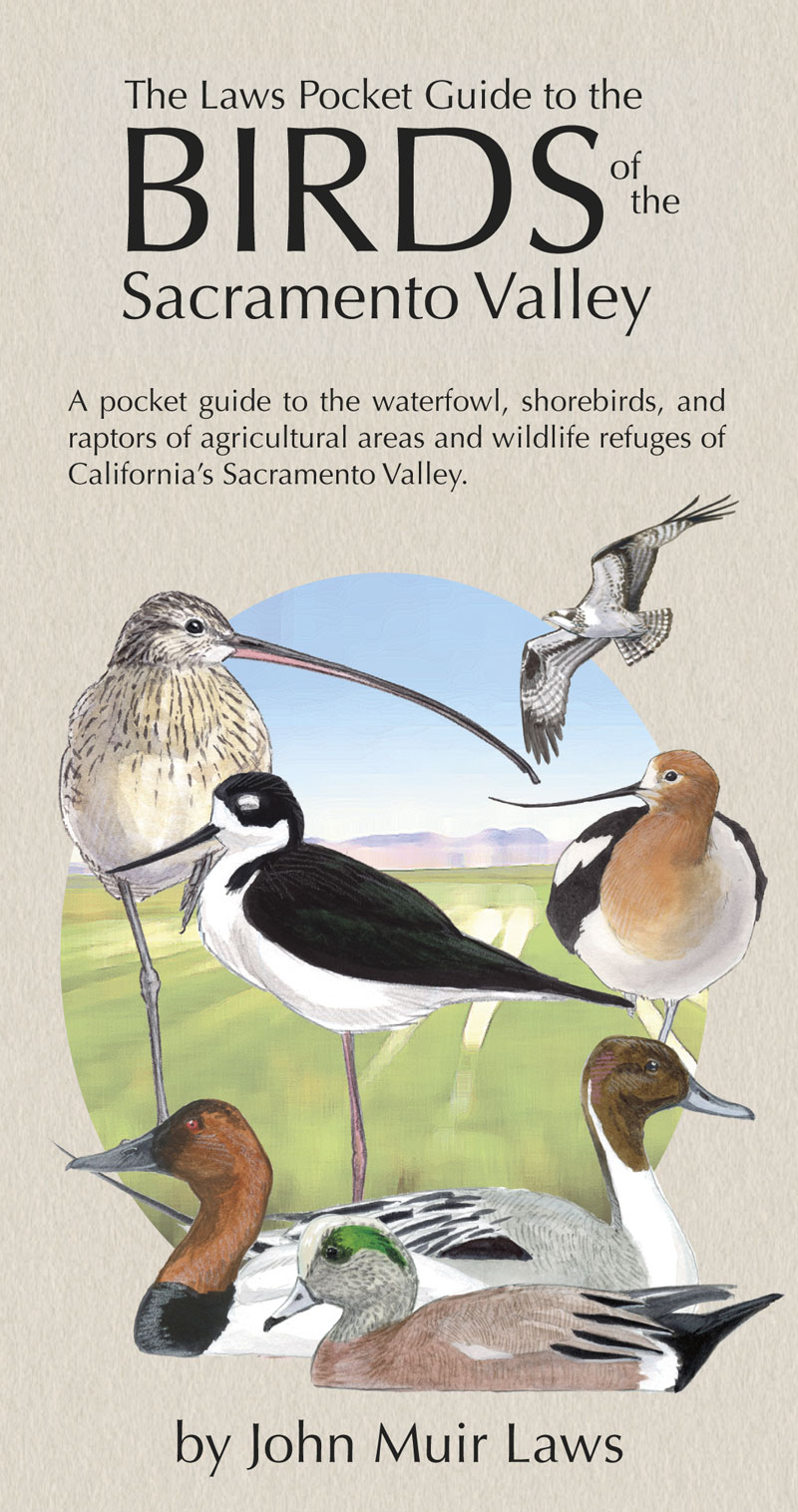 The Laws Pocket Guide to the Birds of the Sacramento Valley