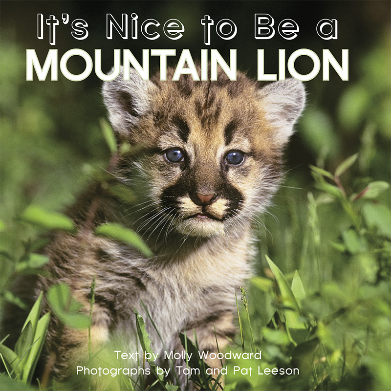 It's Nice to Be a Mountain Lion