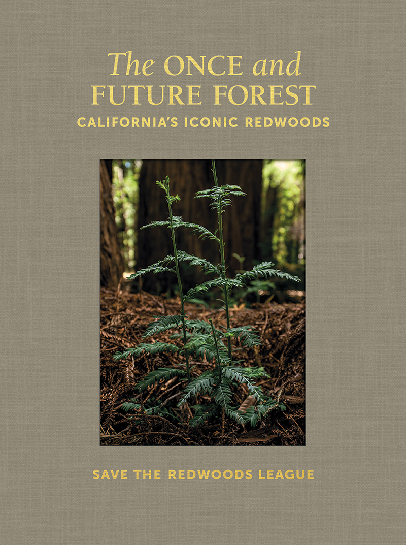 The Once and Future Forest: California's Iconic Redwoods