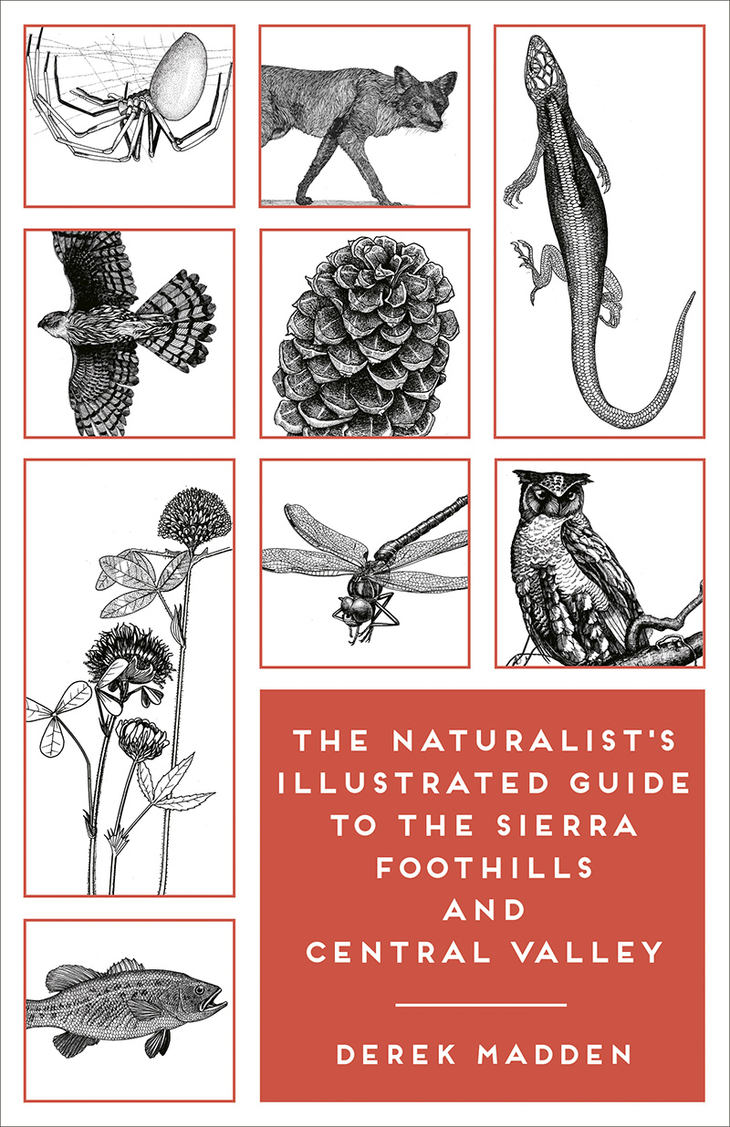The Naturalist's Illustrated Guide to the Sierra Foothills and Central Valley