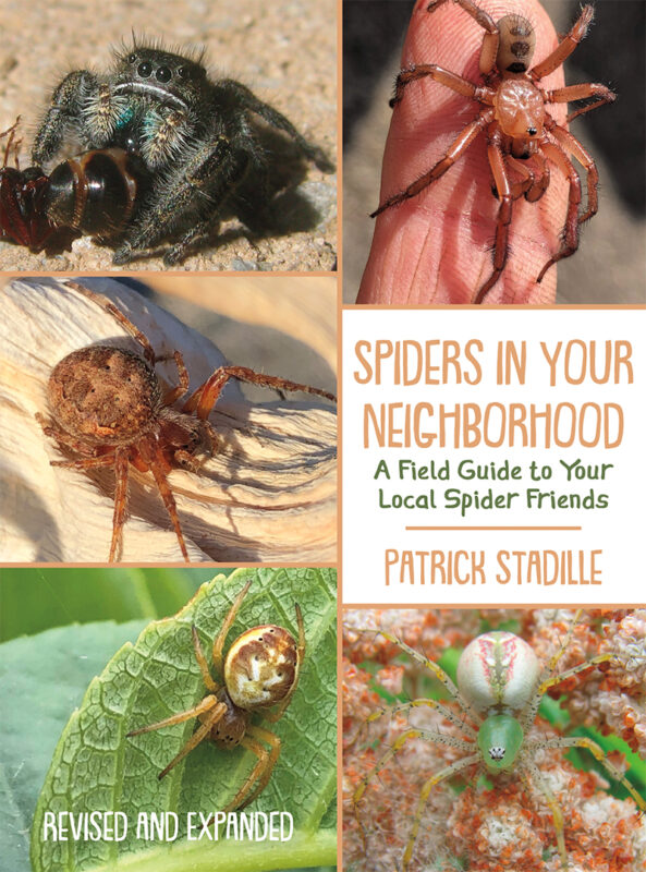 Spiders in Your Neighborhood: A Field Guide to Your Local Spider Friends, Revised and Expanded